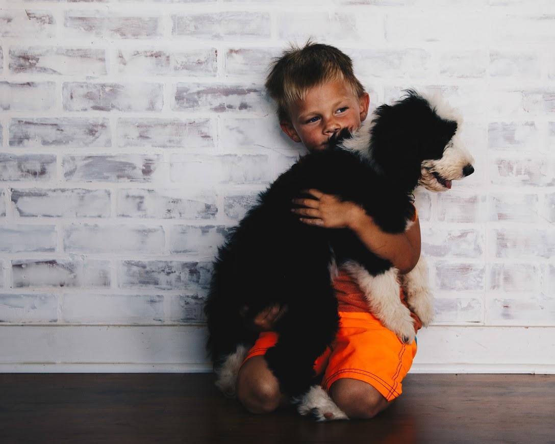 Texas Sheepadoodle Breeder | Sheepadoodle Puppies for Sale